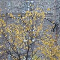 Грустная картина за моим окном... :: Татьяна Юрасова