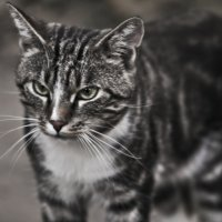 Про жизнь полосатого кота :: Ольга Винницкая
