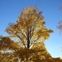 Теплое золото осени :: Дмитрий Ерохин