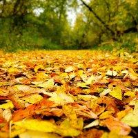 Красота с деревьев устилает землю :: Дмитрий Колесников