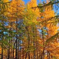 Осенние краски Арктики :: Александр Велигура