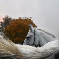 Осень :: Анастасия Рыжова
