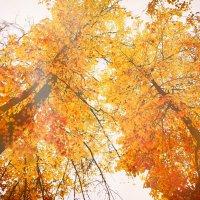 Красота. Люблю осень. :: Дмитрий Колесников