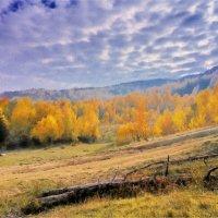 Золотая осень :: Сергей Форос