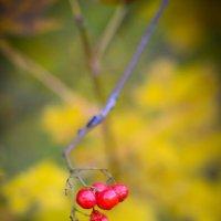 Осень :: Андрей Герасимов