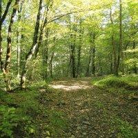 В осеннем лесу :: valeriy khlopunov