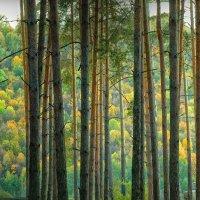 Осенний растр :: Юрий