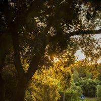 Краски солнца :: Андрей Михайлин