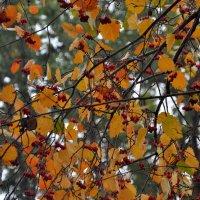 Осенние узоры :: Albina