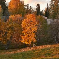 осень :: Седа Ковтун