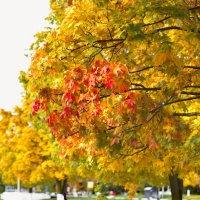 Осень золотая :: Алексей Королёв