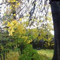 Осень за моим окном 2. :: Михаил Попов