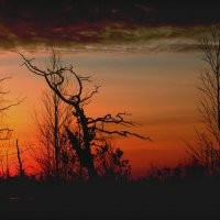 Таёжный рассвет. :: Алексей Хаустов