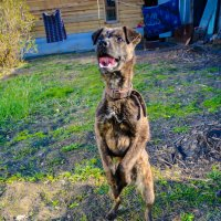 Цирковая собака :: Света Кондрашова