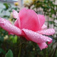 В объятьях облачного цвета Она стоит, дождём одета.... :: Galina Dzubina