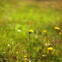 Осенняя  полянка. Гелиос :: Лилия Гиндулина