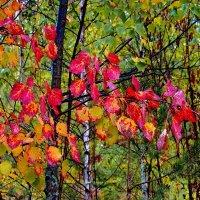 И боль сгорающей листвы... :: Лесо-Вед (Баранов)