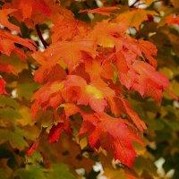 Осенний этюд. :: Paparazzi