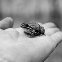 Лягушечка... :: Дмитрий Петренко
