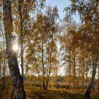 Золото осени :: Николай Мальцев