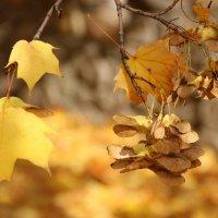 Осень пришла. :: Ирина Королева