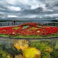 Яркие краски осени на ярославских клумбах и тротуарах города. :: Алла ************