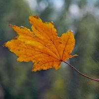 Осенний привет на лобовом стекле... :: владимир