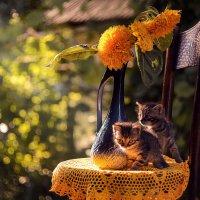 Утром в саду :: LNemykina