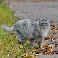 Маленькая рысь выходит на охоту :: Olcen - Ольга Лён