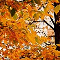 Осенний день-2 :: Фотогруппа Весна.