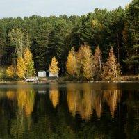 золотая осень .. :: Alla Swan