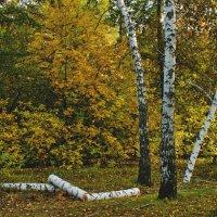Последняя осень :: герасим свистоплясов