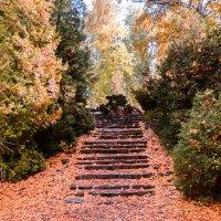 По ступенькам осень к нам пришла... :: Лариса Димитрова
