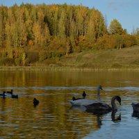 Птицы на  Городищенском озере :: Наталья Левина