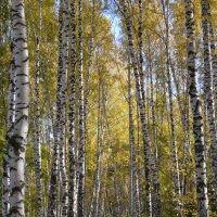 Осень :: grovs