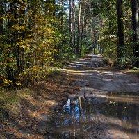 Тайна лесных дорог... :: BoykoOD