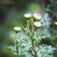 Осенние цветы :: Маргарита Б.
