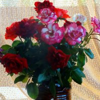 Букет моих роз... :: Тамара (st.tamara)