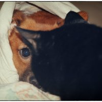 кто спит в моей постели? :: Любовь Потравных