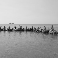 Купание в море на лошадях :: Марина Marina