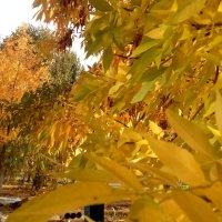 Теплая осень :: Татьяна Королева