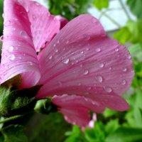 Дождь. :: Елизавета Успенская