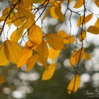 Осень :: Анна Кокарева