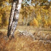 Осенняя пора... :: Лилия *