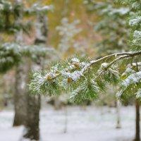 Первый снег :: cfysx