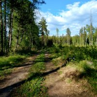 дорога в лес :: linnud