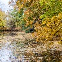 Осенний пруд :: Михаил Кондратенко