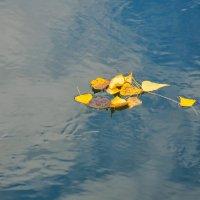 Осенние листья на воде :: Сергей Тагиров