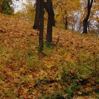 Осень золотая :: ирина