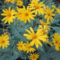 Жёлтые цветы :: Дмитрий Никитин